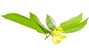 parfumuri-ylang-ylang