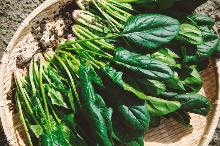 Avem nevoie sa stim care sunt acele vegetale benefice, pentru ca ceea ce consumam, joaca un rol determinant asupra starii noastre de sanatate.