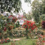 """Irina Neacsu, designer si artist botanic, membru al """"American Society of Botanical Artists"""", anunta deschiderea inscrierilor pentru Scolile de Vara."""
